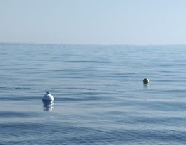 The GPS wave buoy on site.